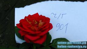 ч/г красная, не определена 00901